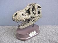 頭骨フィギュア フェバリット FDS-651 ティラノサウルス