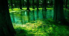 自然な景色
