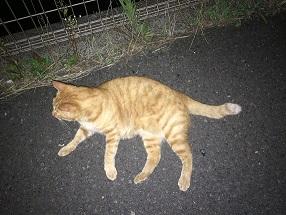 【散歩】夏は夜